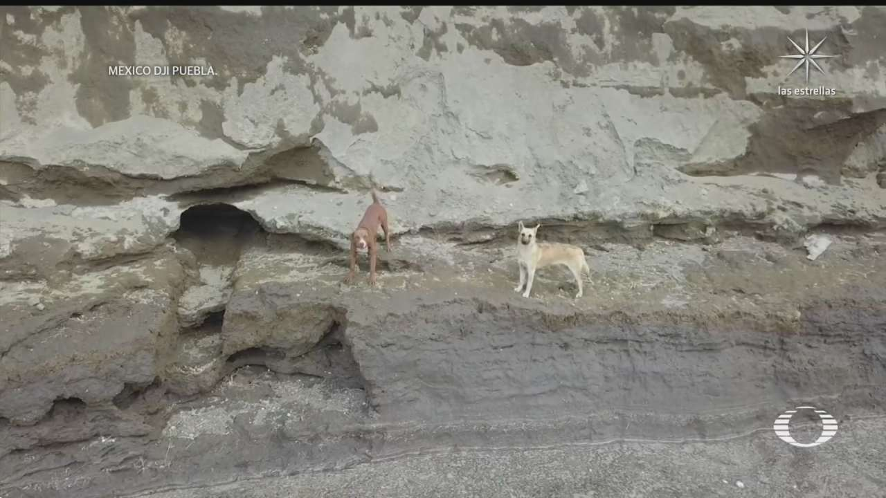 caen dos perritos al socavon hay dificultad para rescatarlos