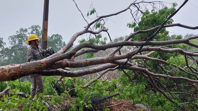CFE restablece suministro eléctrico en estados afectados por tormenta tropical 'Dolores' en un 80.5 %