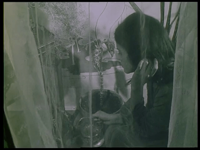 Jean-Louis Jorge Cine La Serpiente de la luna de los piratas