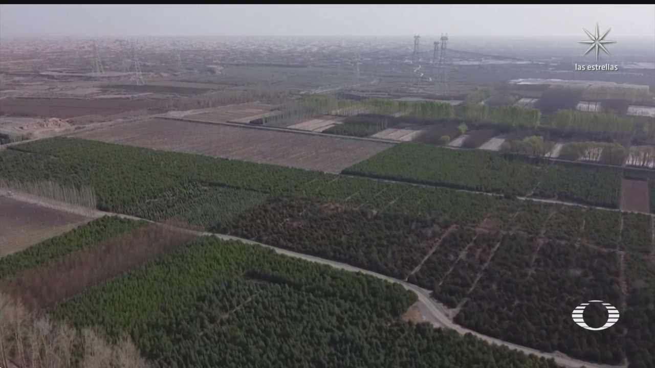 la gran muralla verde contra el cambio climatico
