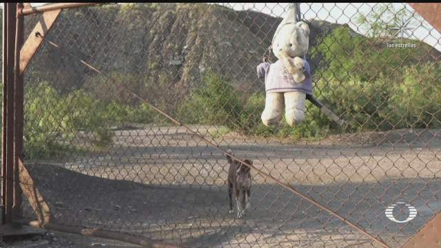 perrito espera a su dueno afuera de la mina de muzquiz coahuila