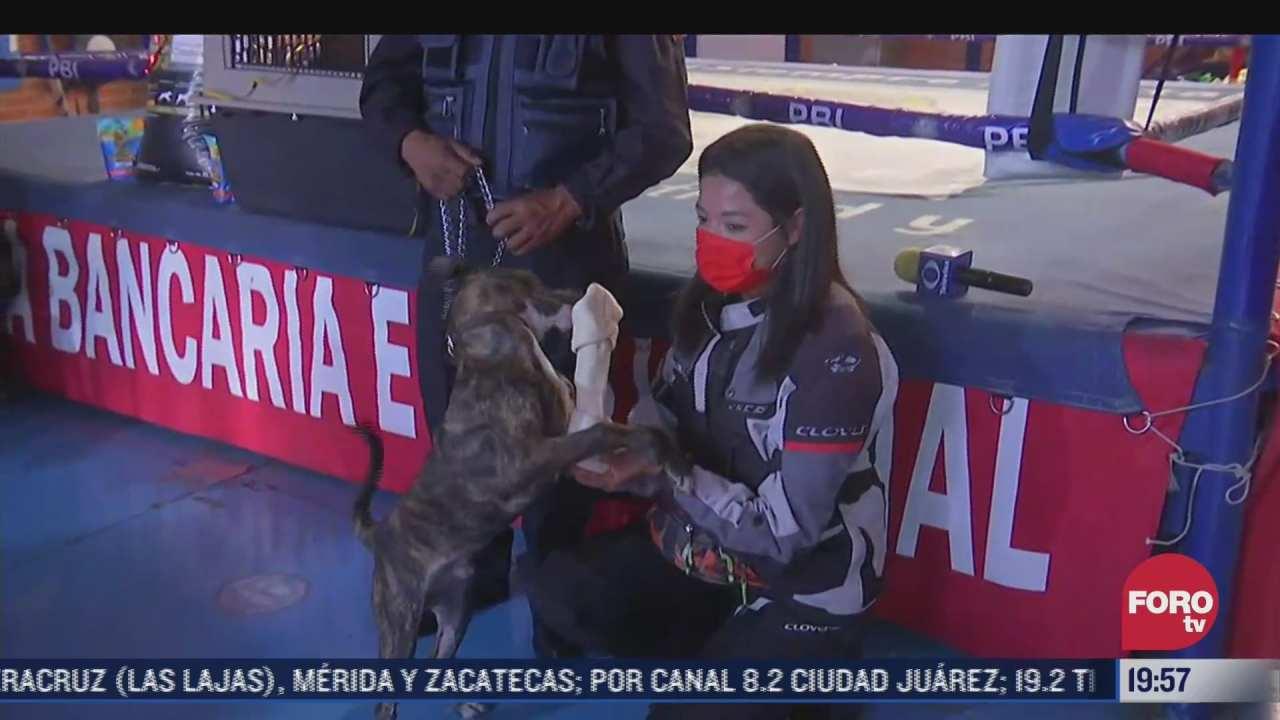 policias donan diversos articulos a perro adoptado por uno de sus elementos