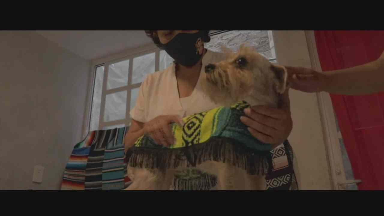 retratos de mexico jorongos para perros