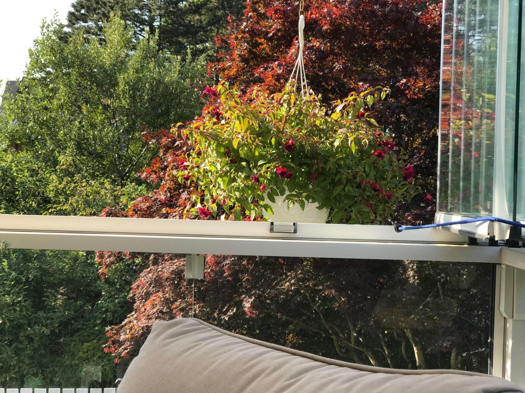 reto visual, colibrí, jardín, viral