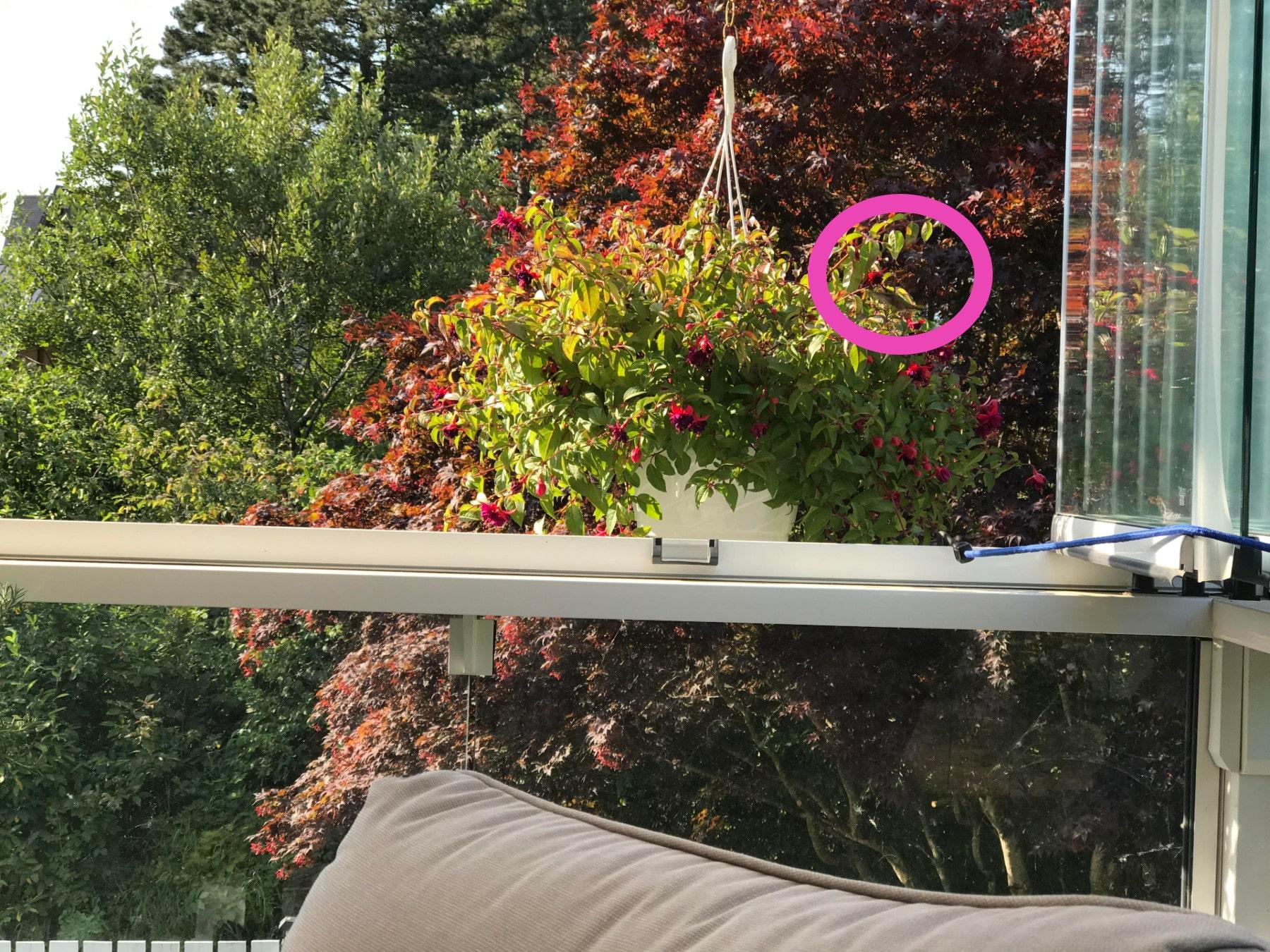 colibrí, reto viral, jardín, acertijo