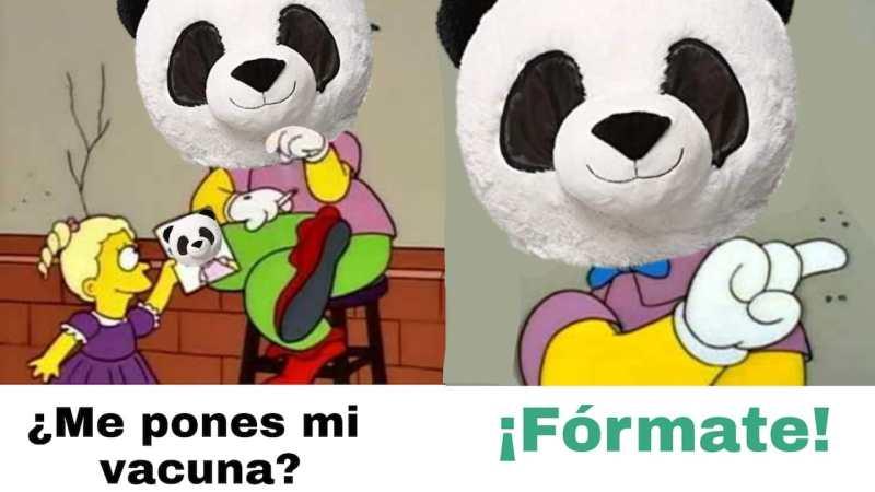 Pandemio, el panda, se hace viral con memes – Noticieros Televisa