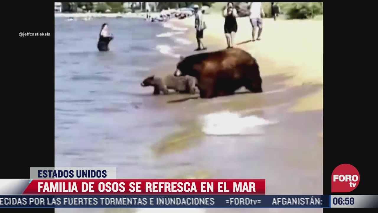 familia de osos tenia calor y decide refrescarse en una playa de california