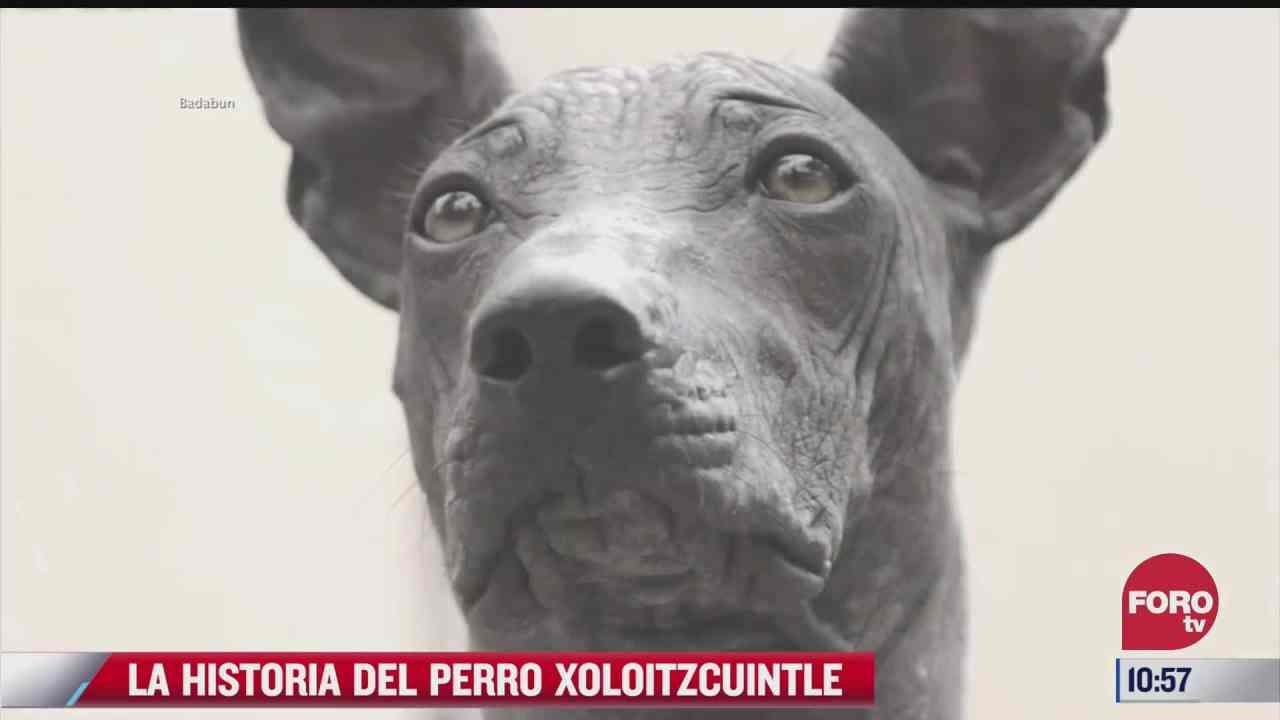 la historia del perro xoloitzcuintle