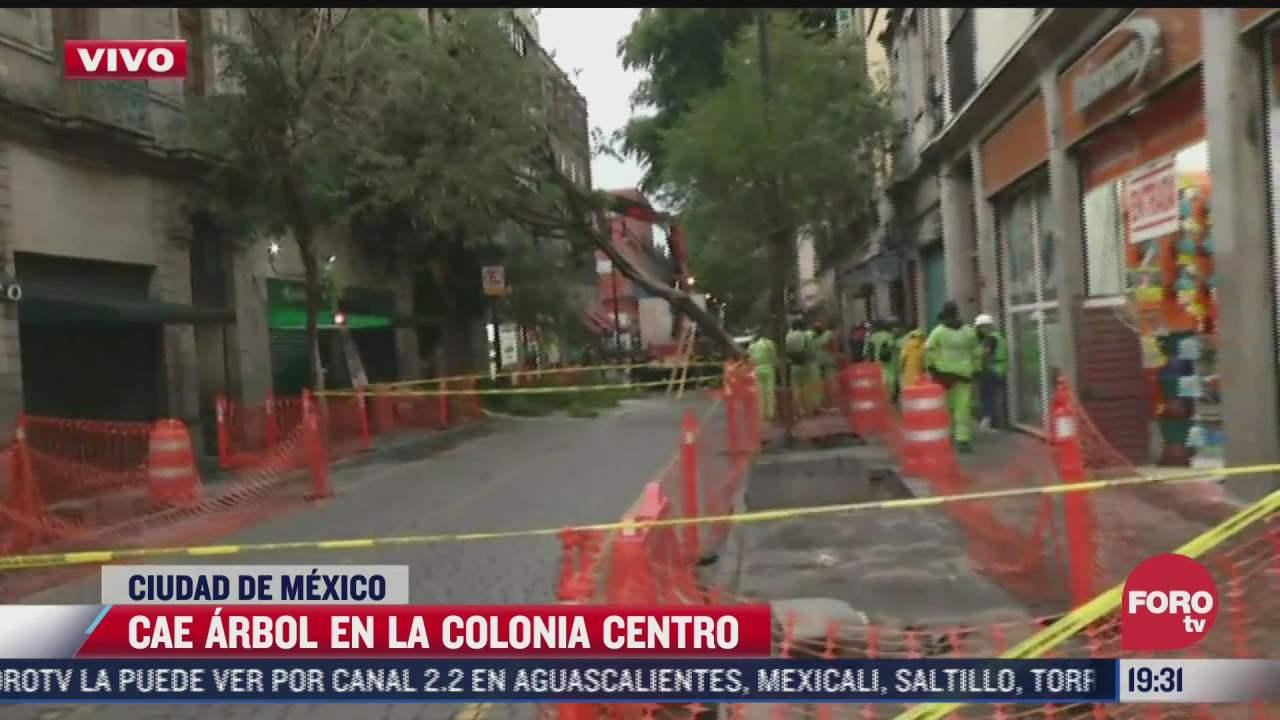 se desprende arbol en calles de la colonia centro