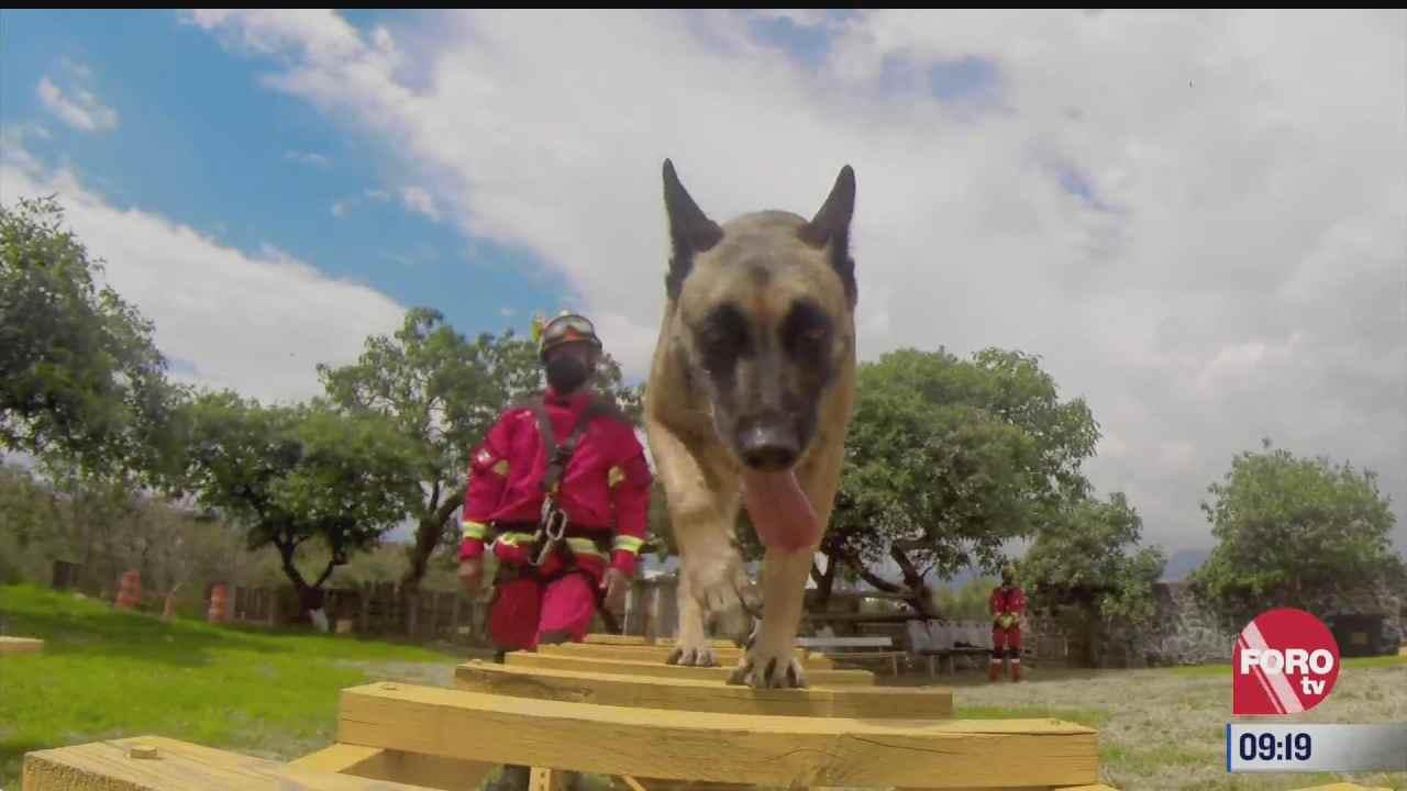 Retratos de México: Adiestramiento canino