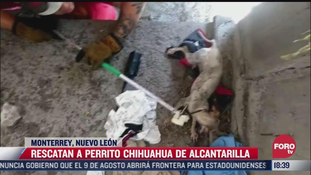 video rescatan a perro chihuahua que paso una semana atrapado en alcantarilla