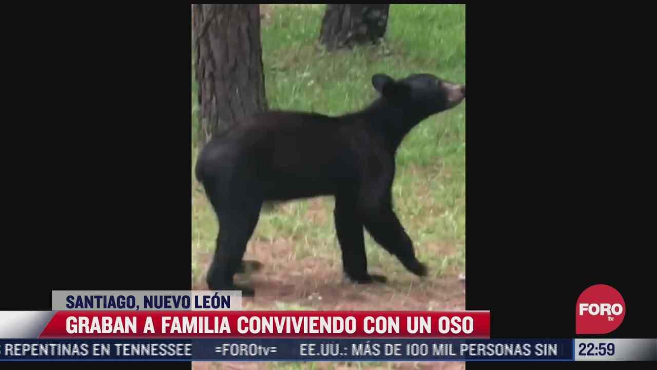 graban a familia conviviendo con un oso en nuevo leon