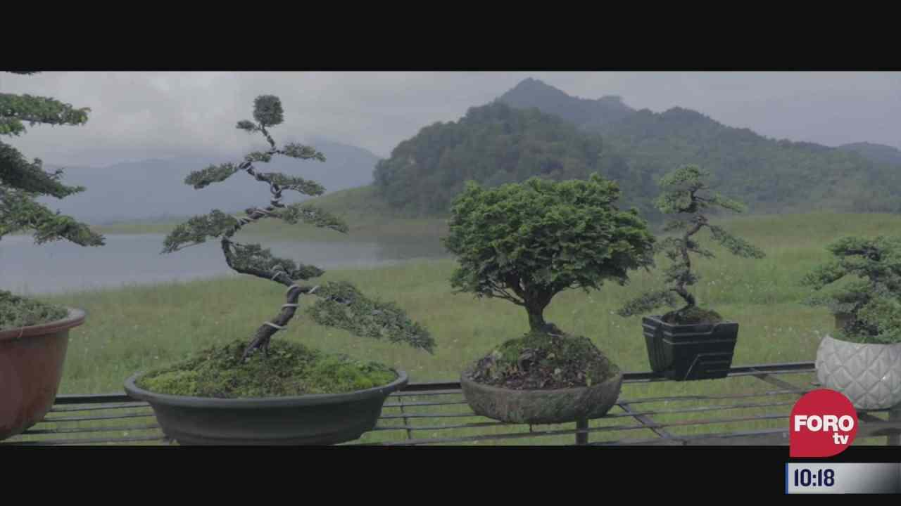 retratos de mexico productor de arboles bonsai