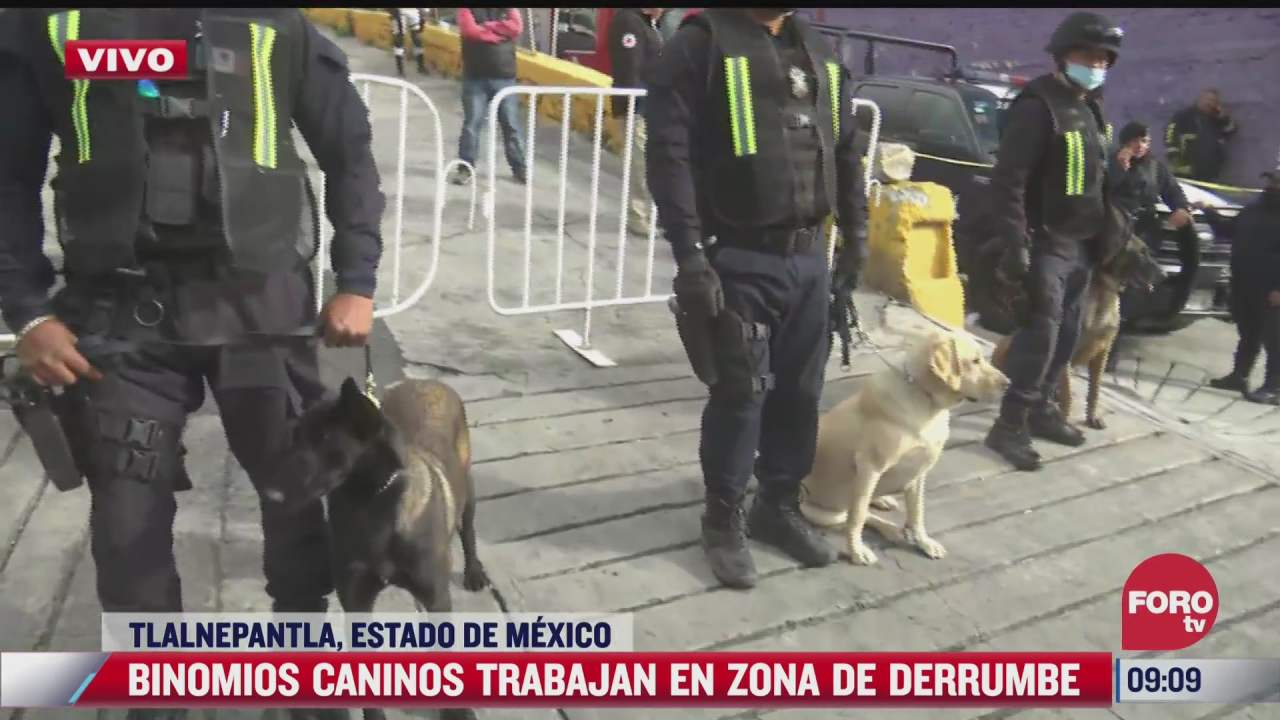 binomios caninos trabajan en zona de derrumbe en cerro del chiquihuite