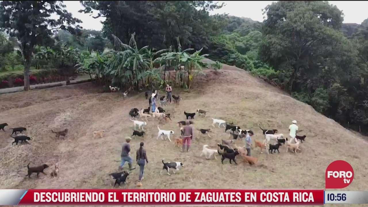 descubriendo el territorio de zaguates en costa rica