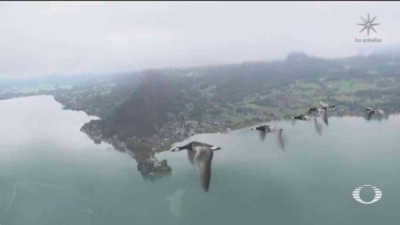 empresa francesa ofrece volar con gansos