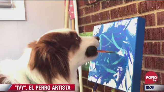 ivy el perro artista que pinta obras de arte