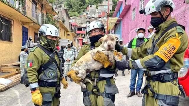 """Salvan a perro de entre los escombros de la zona donde se derrumbó parte del """"Cerro del Chiquihuite"""" (Twitter: @_Antonio136)"""