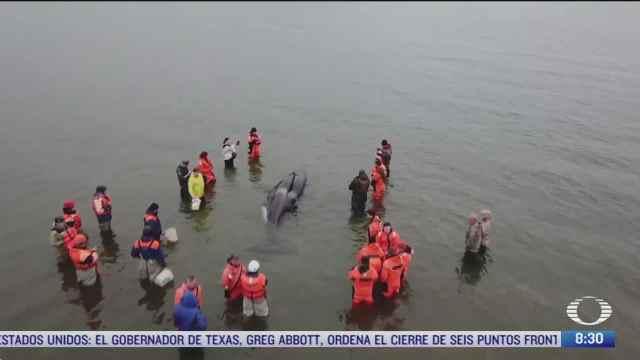 rescatan con exito a una orca bebe