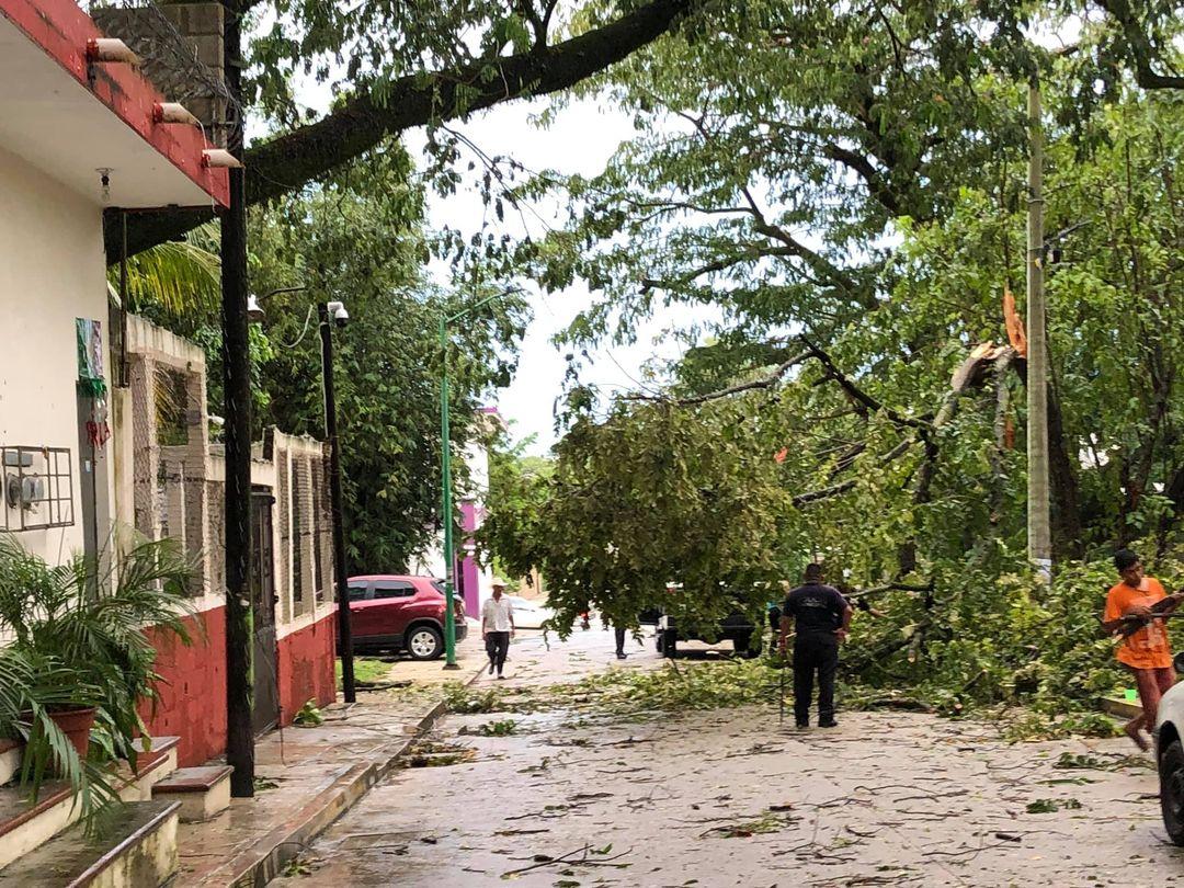 Tormenta y fuertes vientos derriban árboles en Palenque. Chiapas