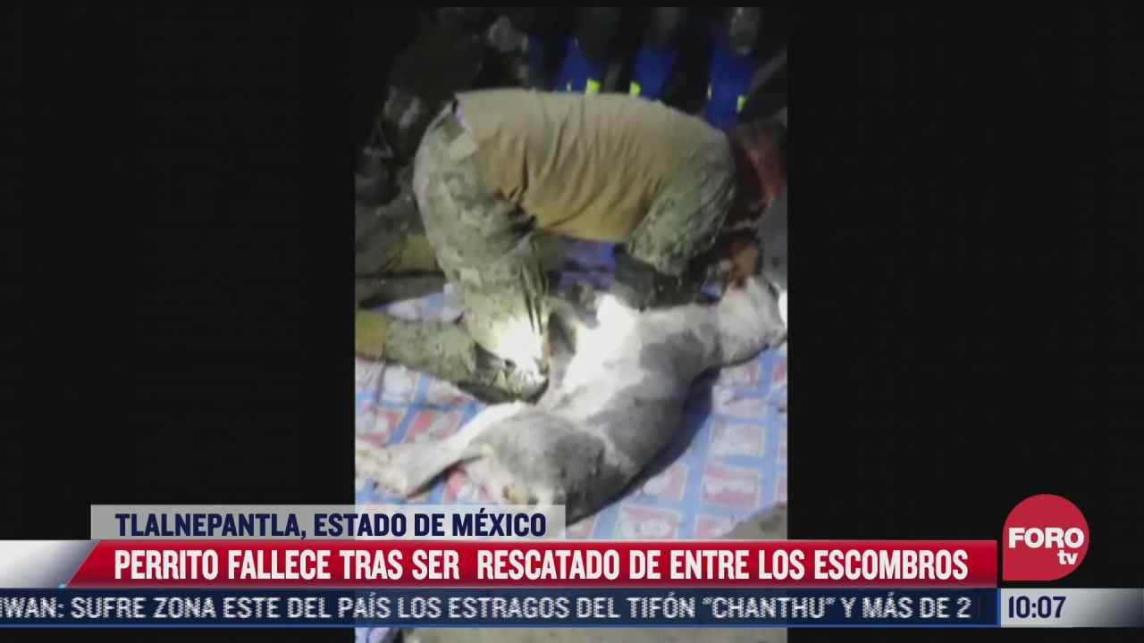 video fallece perrito tras ser rescatado del chiquihuite