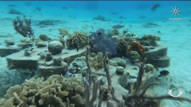 al rescate de los corales en el caribe mexicano