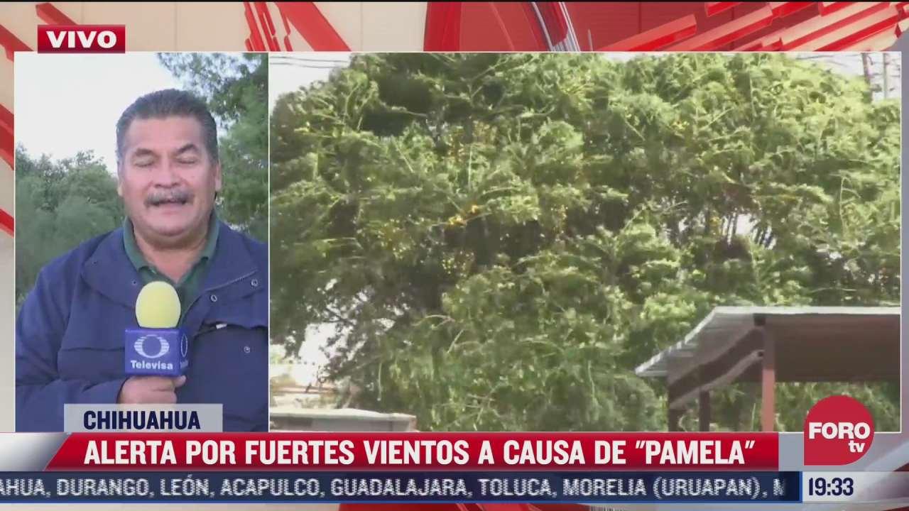 chihuahua se vera afectado por los efectos de pamela