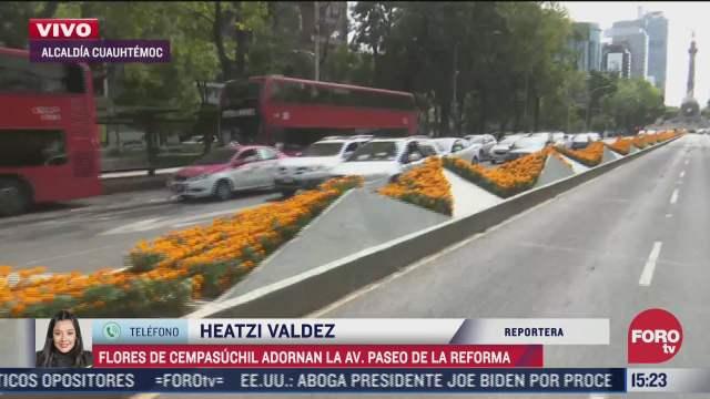 flores de cempasuchil adornan paseo de la reforma en cdmx