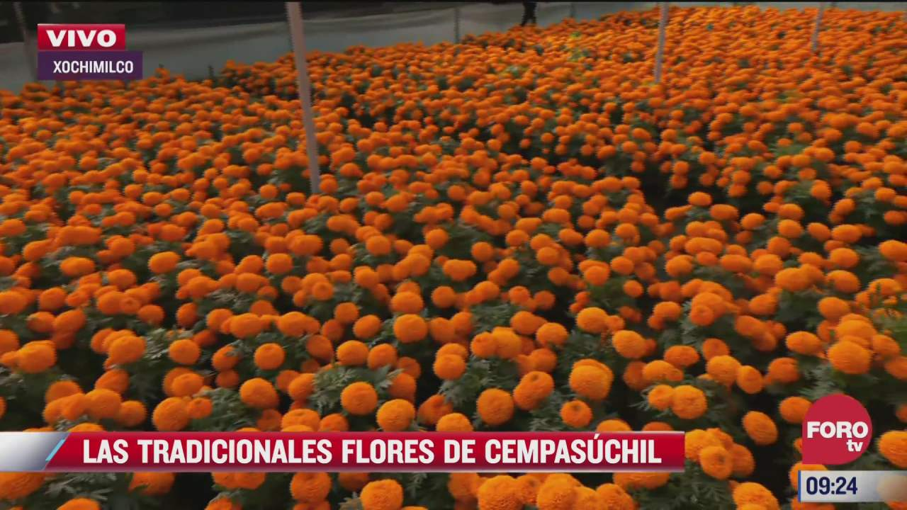 las tradicionales flores de cempasuchil
