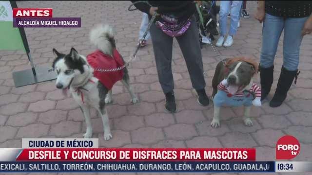 perritos buscan ganar un concurso de disfraces en cdmx