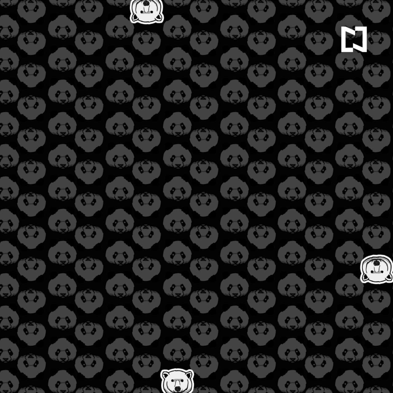 Respuesta del reto visual de los osos polares entre los pandas