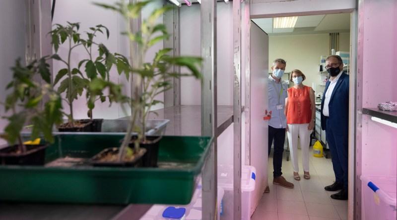 Diputació de Castelló i UJI impulsen un projecte d'investigació internacional per a combatre plagues i malalties en cultius mediterranis amb microorganismes beneficiosos