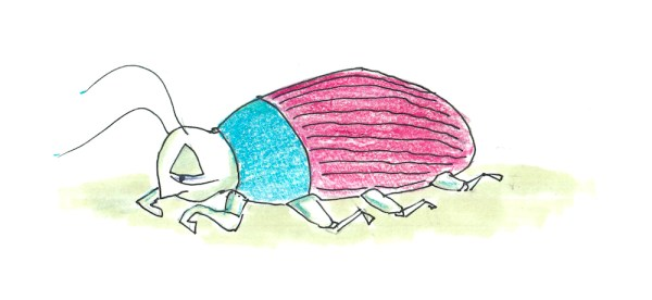 Lazy Beetle