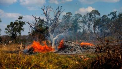 Photo of Amazonas: Ayuda del G7 y una propuesta de Macrón a Evo