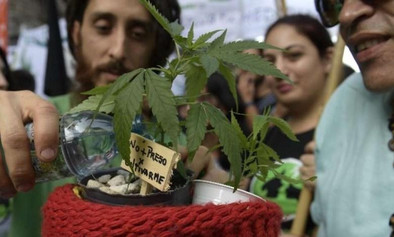 Photo of ¿Argentina en camino a la legalización de la marihuana?