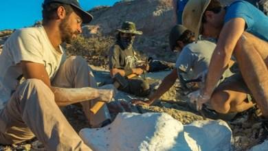 Photo of Descubrieron restos de un nuevo dinosaurio en la Patagonia
