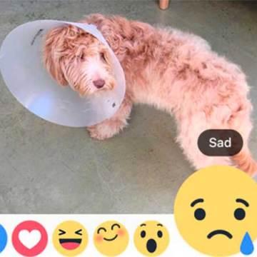 Facebook ya te da más opciones en su ícono 'Me gusta'