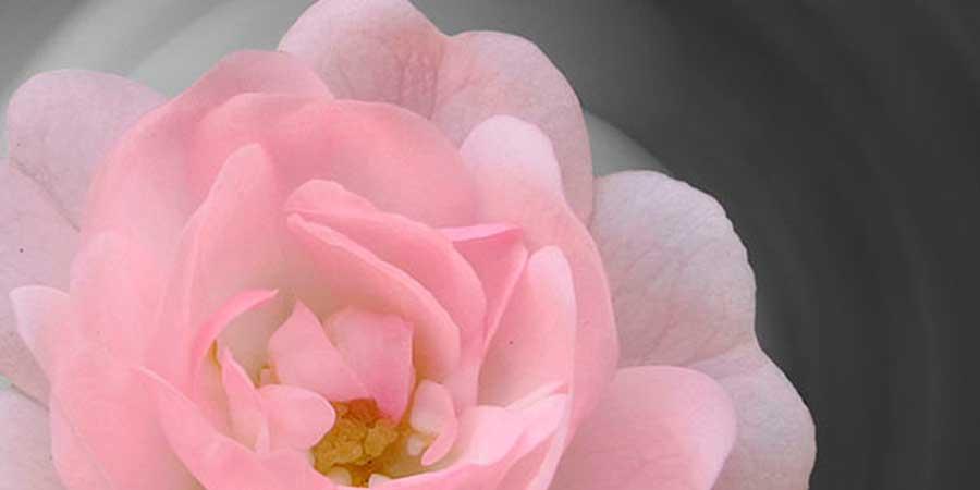 ¿Cuál es el impacto psicológico por diagnóstico de cáncer de mama?