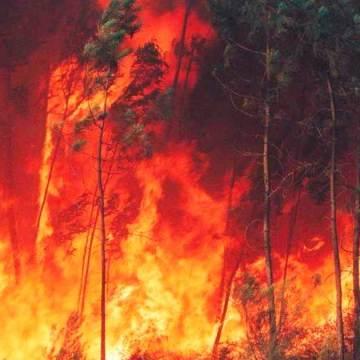 Gobierno de México brinda apoyo a Guatemala para labores de extinción de incendios forestales