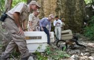 Luego de 50 años, el mono araña vuelve a habitar el Cañón del Sumidero: Manuel Velasco