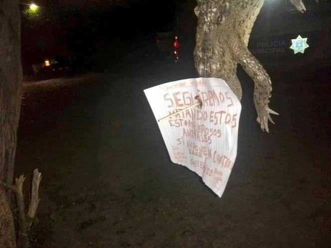 Investigan ejecución de cocodrilo en Puerto Vallarta
