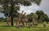 Alertan científicos por extinción de un millón de especies