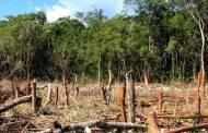 FGE trabaja con las denuncias de saqueo de los recursos maderables en Chiapas
