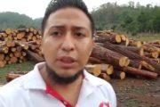 Sanciones aquellos que realizan tala de árboles en Chiapas