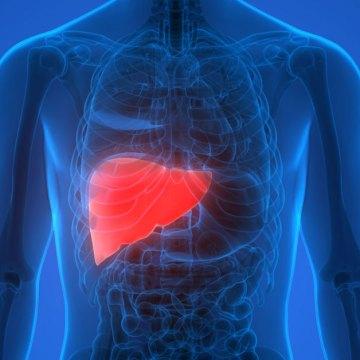 Obesidad y diabetes, principales factores que provocan el hígado graso.
