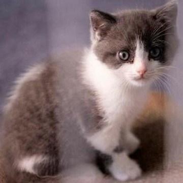Clonar a tus gatos ahora es posible en China