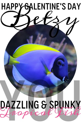 BETZY, you dazzling and spunky tropical fish