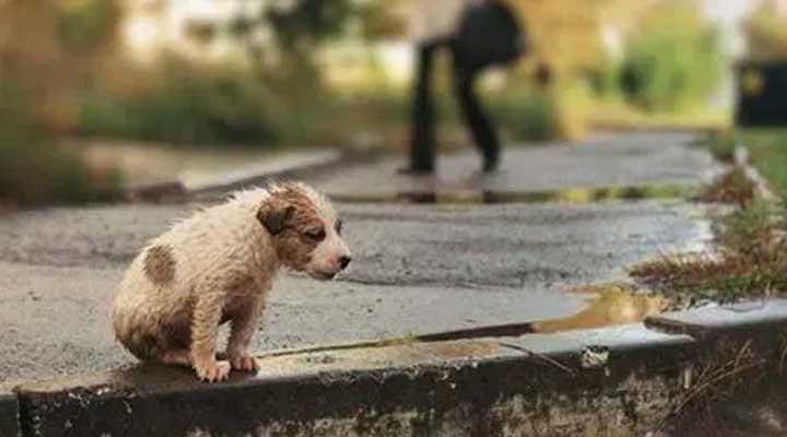 Los animales domésticos sufren cada día mas de la situación económica venezolana.