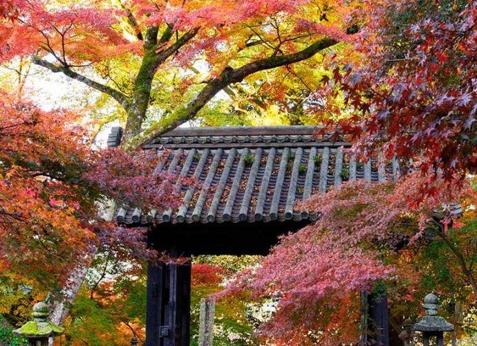 Parqu del Castillo de Akizuri, Asakura