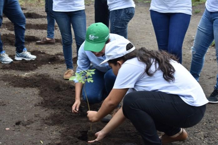 reforestación colegio modelo SER San Antonio